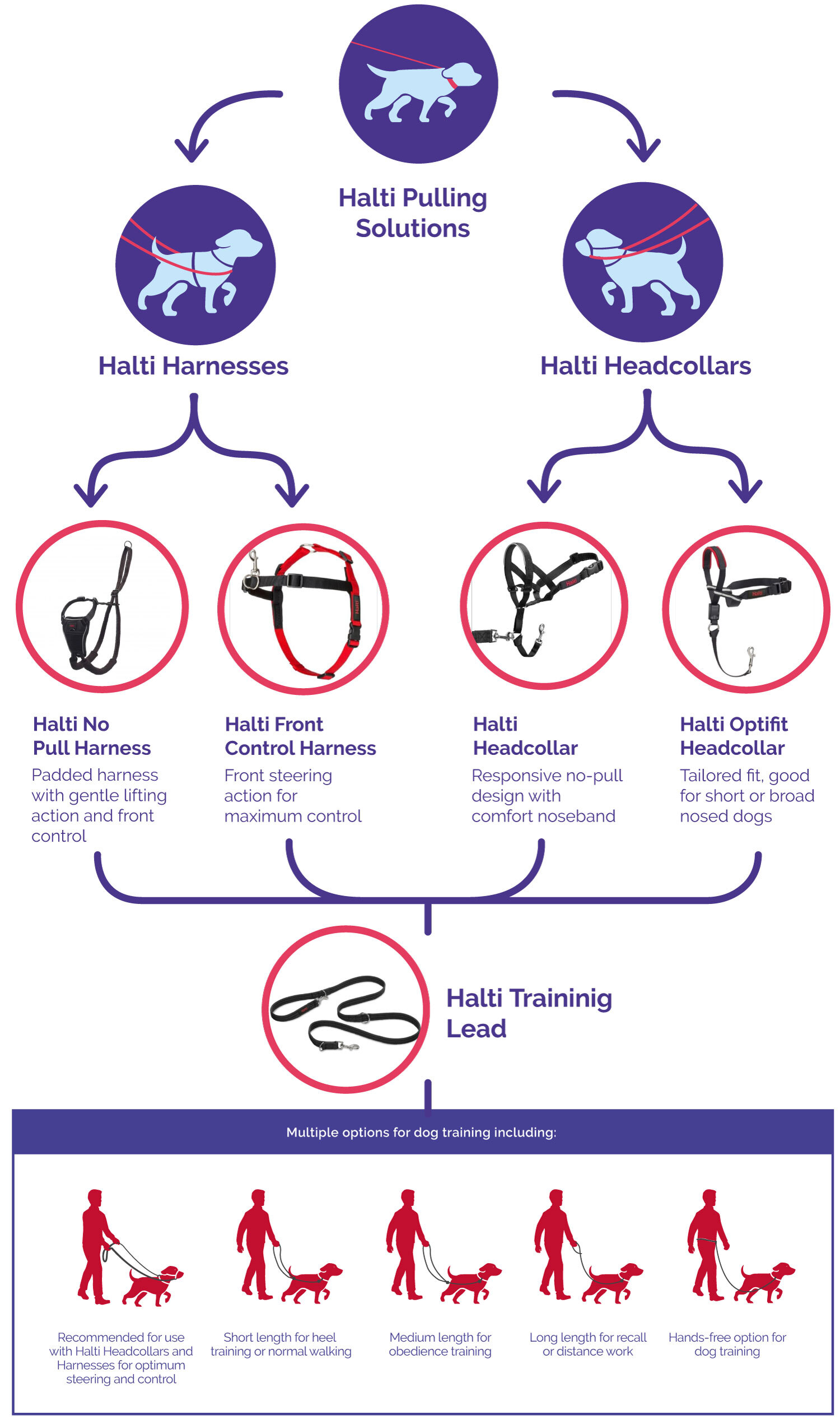 Flow diagram showing whether you need a Halti head collar or a harness