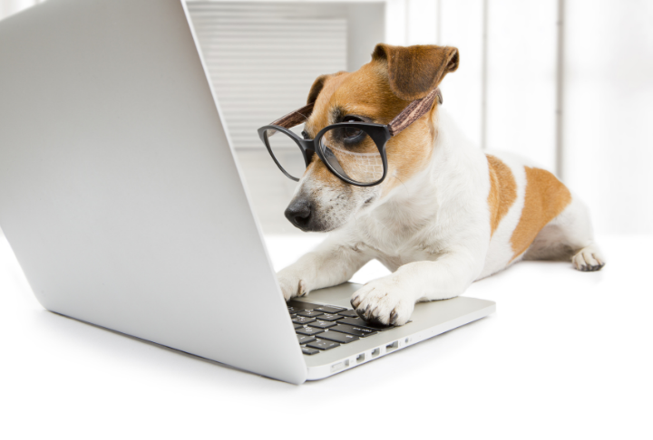 A puppy wearing spectacles sat at a computer