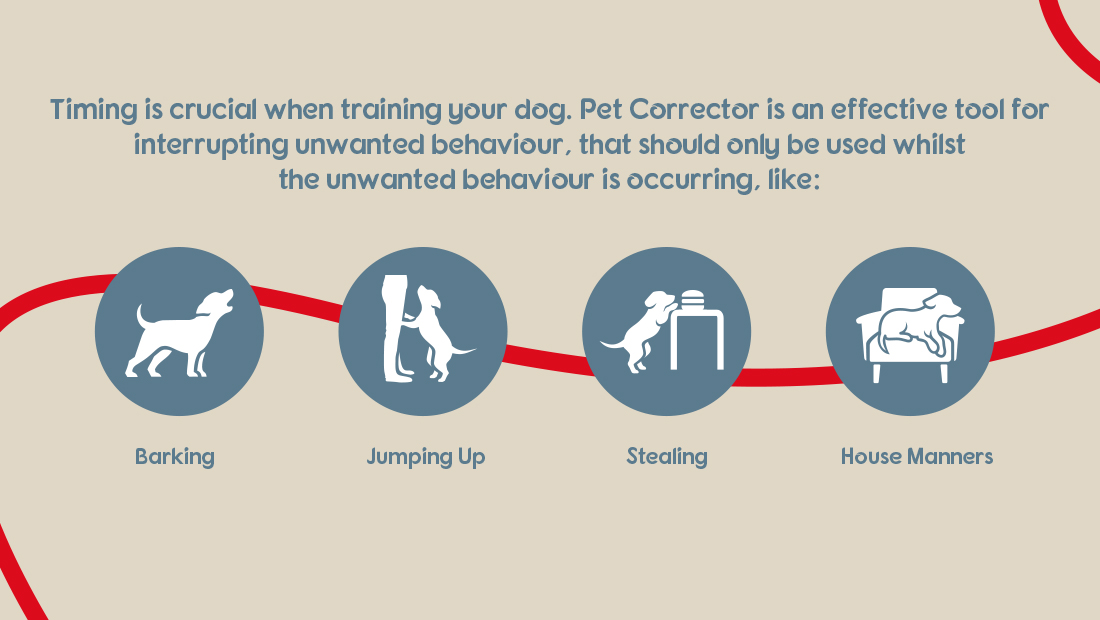 Pet Corrector usage guide