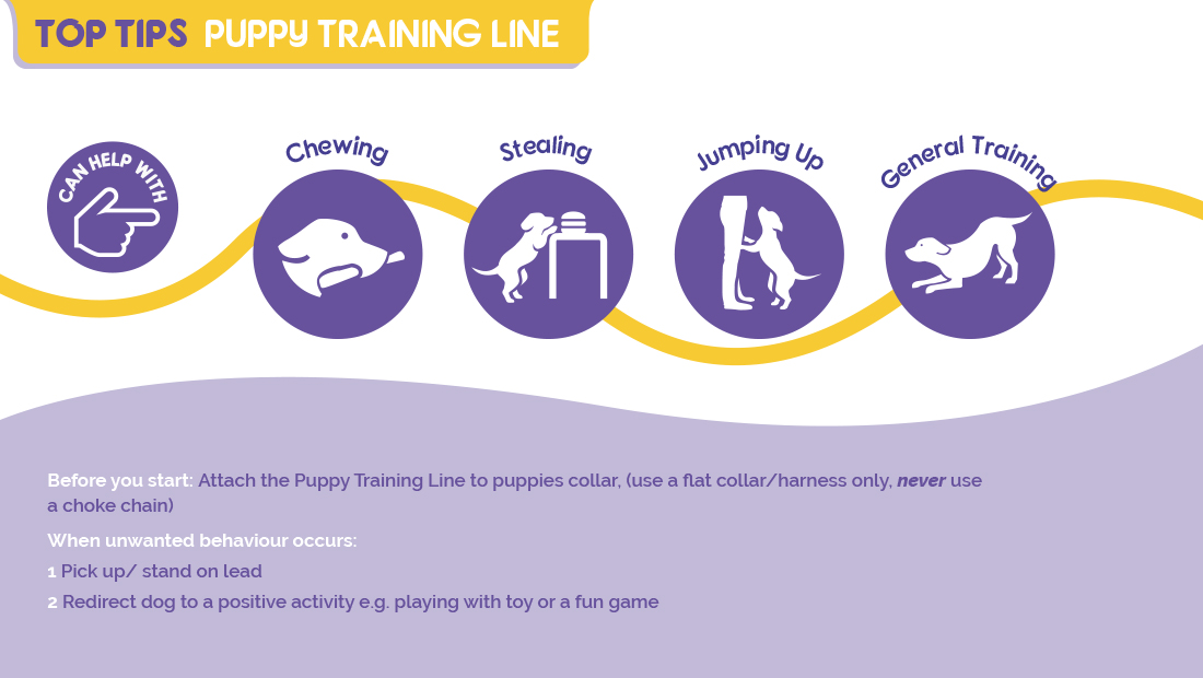 Top tips for using the Company of Animals Puppy Training Line