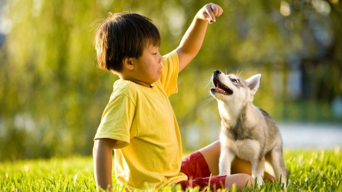 a young child feeding a treat to a puppy in a field while the sun shines
