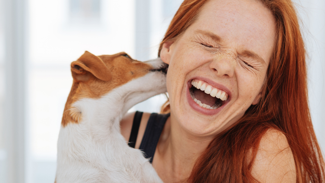 A small dog licking a laughing woman's ear