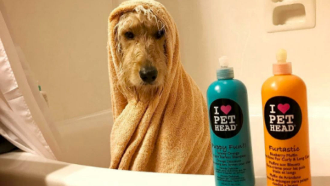 A dog in a bath wrapped in a towel next to two bottles of Pet Head