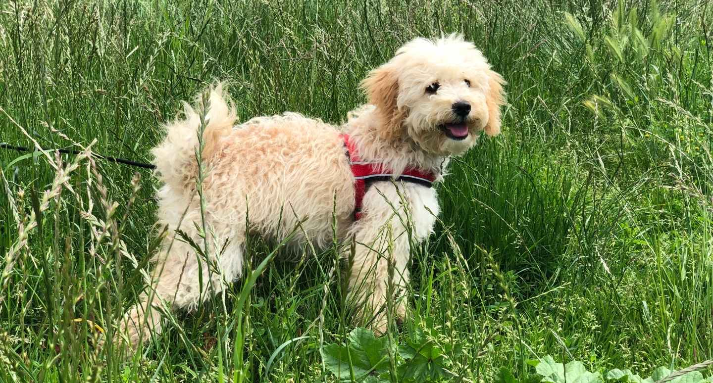A dog in long grass