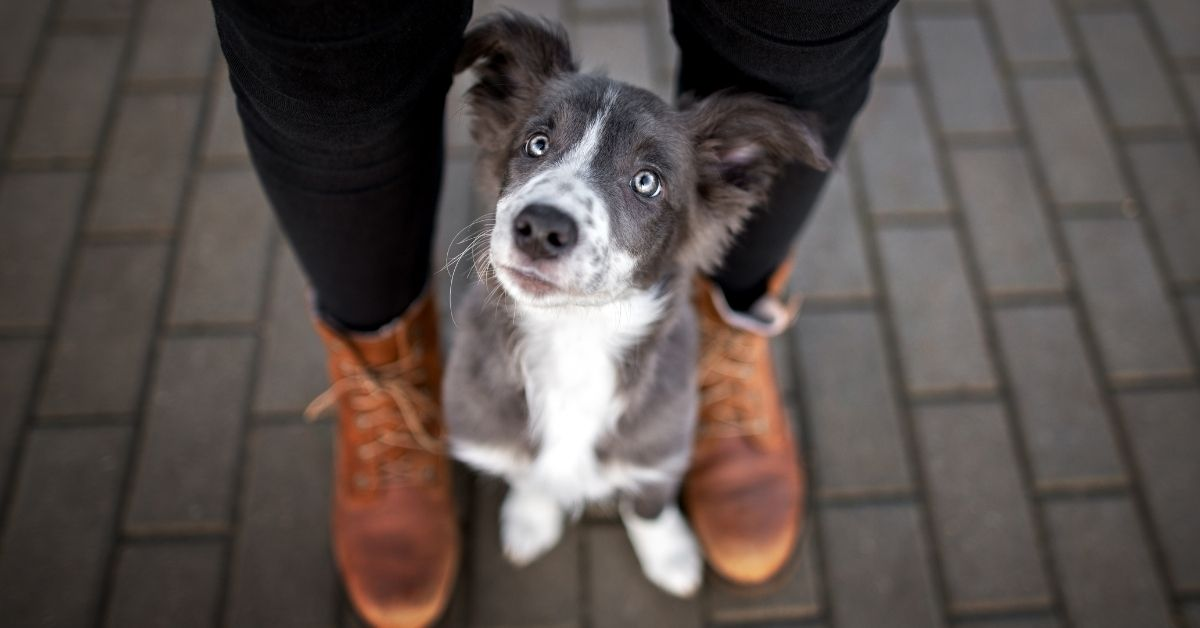 Puppy standing between the legs of his owner
